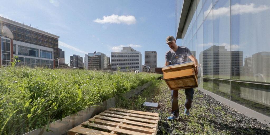 Σε ορισμένες χώρες έχει αναδειχθεί ένα νέο είδος ενασχόλησης με τις μέλισσες, το οποίo έχει αποκτήσει εξαιρετική δημοφιλία ως χόμπι: η αστική μελισσοκομία!